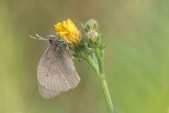 与蝴蝶的美好的自然场面 库存图片
