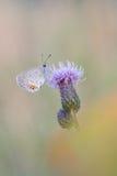 与蝴蝶的美好的自然场面 免版税库存照片