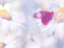 与蝴蝶的花卉背景 免版税图库摄影