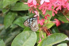 与蝴蝶的花 免版税库存图片
