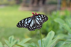 与蝴蝶的花 图库摄影