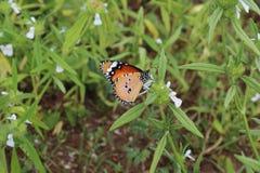 与蝴蝶的花 免版税库存照片
