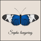 与蝴蝶的葡萄酒卡片 最小的平的传染媒介例证 longwing的Sopho 字法手写书法 葡萄酒或减速火箭 免版税库存照片