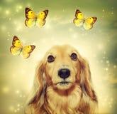 与蝴蝶的达克斯猎犬狗 免版税图库摄影