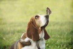 与蝴蝶的逗人喜爱的狗在他的鼻子 免版税库存照片