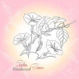 与蝴蝶花和野生植物的桃红色背景 免版税图库摄影