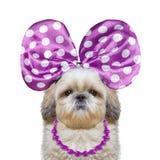 与蝴蝶结和项链的逗人喜爱的俏丽的狗 免版税库存照片