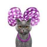 与蝴蝶结和项链的逗人喜爱的俏丽的猫 免版税图库摄影