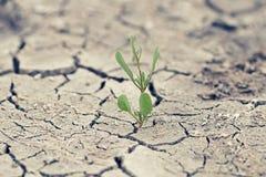 与破裂的地球的绿色新芽 库存图片