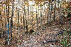 与破裂的棕色叶子的落叶树在秋天自然 免版税库存照片