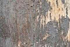 与破裂的油漆的老木纹理 免版税库存照片