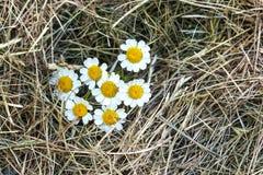 与戴西花的黄色秸杆干草 库存图片