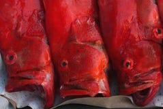 与说谎在一个盘子的一张大开嘴的三条海明亮的红色鱼待售,果阿,印度 图库摄影