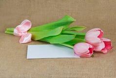 与说谎在信封的缎丝带的三桃红色郁金香 免版税库存图片