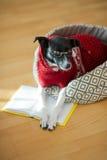 与说谎在他的长沙发的聪明和亲切的眼睛的狗在一间空的屋子中间 库存图片
