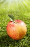 在绿草的一个红色苹果 图库摄影