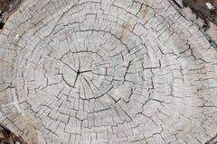 与年轮特写镜头的被风化的和崩裂的老灰色树干表面作为背景 库存照片