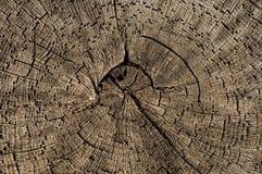 与年轮的老木头 库存图片
