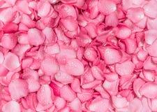 与水雨下落的新桃红色玫瑰花瓣背景 免版税库存照片