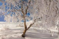 与结霜的树的美丽如画的多雪的风景 免版税库存图片