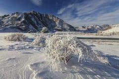 与结霜的树的美丽如画的多雪的风景 免版税库存照片