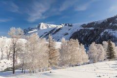 与结霜的树的美丽如画的多雪的风景 库存照片
