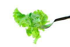 与素食概念的莴苣 免版税库存照片