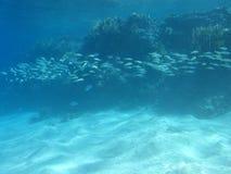 与绯鲵鲣浅滩的珊瑚礁在热带海,水下 免版税图库摄影