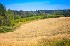 与黑麦、森林和天空的领域的夏天风景 库存图片