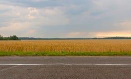 与黑麦的耳朵的夏天风景 图库摄影