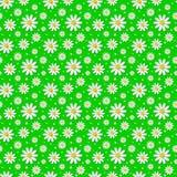 与3d春黄菊的传染媒介无缝的花卉样式 免版税库存图片