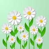 与3d春黄菊的花卉背景 免版税库存照片