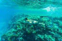 与年轻freediver妇女,水下的生活的美丽的珊瑚礁 文本的Copyspace 库存图片