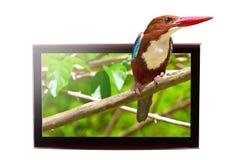 与3D鸟的电视在显示 免版税库存照片