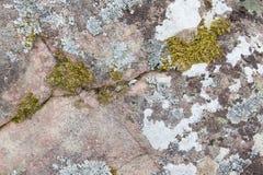 与algea和青苔的大岩石 免版税库存照片