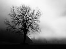 与backlightning的偏僻的在黑白的树和雾 库存图片