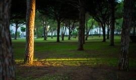 与bathsun的树 免版税图库摄影
