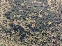 与bird& x27的森林红色森林风景; s眼睛视图 免版税库存照片