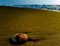 与blazzing的沙子的海海滩 图库摄影