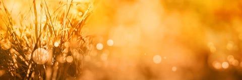 与bokeh的光芒四射的秋天背景 免版税库存图片