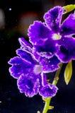 与bokeh的艺术性的宏观紫色花 免版税库存图片