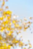 与bokeh的被弄脏的黄色秋天树 库存图片
