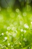 与Bokeh的绿草 免版税库存图片