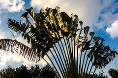 与bule天空的香蕉领域 库存照片
