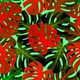 与colorfull monstera叶子的热带无缝的样式 时兴的背景 库存照片