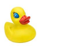 与copyspace的逗人喜爱的黄色鸭子 免版税库存图片