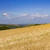 与Corfe城堡的成熟金黄麦田在距离 库存照片
