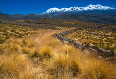 与Corpuna火山,秘鲁的横向 免版税库存图片
