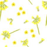 与cowslip的春天花卉无缝的样式 库存图片