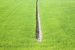 与ditc的麦子绿色领域 免版税库存图片